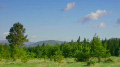 Timelapse nature scene coniferous forest, mountains and flying clouds Stock Footage