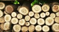 Wood Series Stock Footage