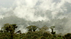Misty cloudforest in the Ecuadorian Andes - stock footage
