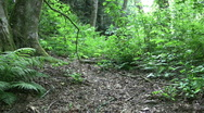 Asian Girl Walking Through The Woods Stock Footage