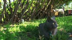 Curious Cat Stock Footage