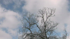 HD Bare winter tree with frozen twigs on cloudscape background - stock footage