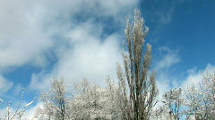 HD Snowbound trees on cloudscape background - stock footage