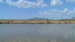 A wide shot of a watering hole in Africa with cattle in distance. Stock Footage