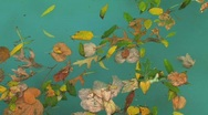 Leafs in water Stock Footage