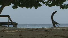 P01041 Bird by Ocean Shore Stock Footage