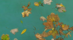 Leafs in water - stock footage