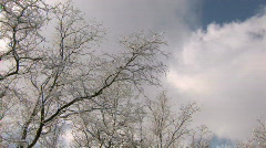 HD Bare winter trees with frozen twigs  - stock footage
