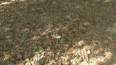 P01044 Land Crab Stock Footage