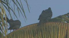 P01045 Jamacia Bird Life Stock Footage