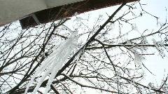 Frozen trees 1 Stock Footage