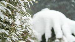 Snow falling on evergreens 2 - stock footage