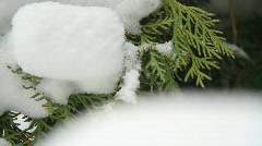 Snow falling on evergreens 1 Stock Footage