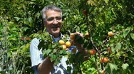 Stock Video Footage of happy farmer shows his harvest - apricot tree