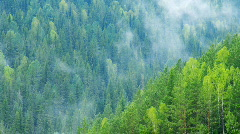 timelapse morning summer forest with rising up fog - stock footage