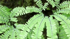 Ferns Stock Footage