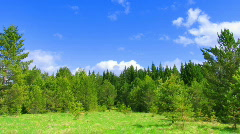 timelapse clouds above summer forest during sunny day - stock footage