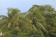 Rain on coconut palms Stock Footage