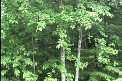 Rain in deciduous woods Stock Footage