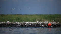 Brown Pelicans nesting on oiled Pelican Island after Gulf BP oil spill_06 Stock Footage