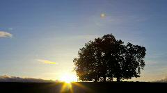 Oak Tree Silhouette, Time Lapse Stock Footage
