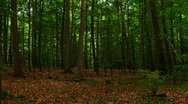 Trees in the forest Stock Footage