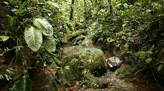 Rainforest stream Stock Footage