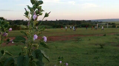 African flowers in foreground and soccer game in background Stock Footage