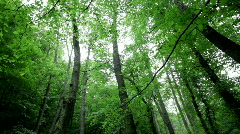 Forest breeze Stock Footage
