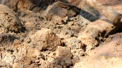 Close up of hoe digging in dirt Stock Footage