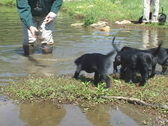 Stock Video Footage of Puppies Water