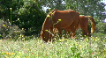 Horse pasture. HD Footage