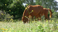 Stock Video Footage of Horse pasture.