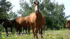 Horse grazing. Stock Footage