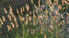 Close up of the spiky branches of an African thorny bush. - stock footage