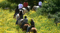 Horse pasture. Horses with riders go in one line Stock Footage
