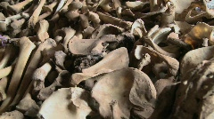 Bones lie in display in a church in Rwanda following the genocide there. - stock footage