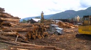Stock Video Footage of log skidder at log mill, timelapse