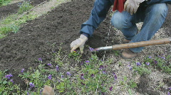 Clearing flowerbeds. Two shots. Stock Footage