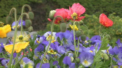 Spring Bouquett  Stock Footage
