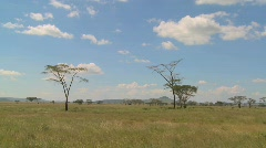 Clouds linger over the Serenegti plain in Africa. - stock footage