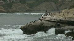 Ocean, Rocks, Seagull 02 Stock Footage