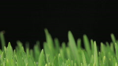 Grass growing - stock footage