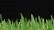 Stock Video Footage of Grass growing