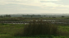 Hula cranes 2 Stock Footage