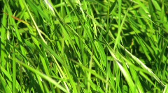 Grass Footage / Background Video Stock Footage