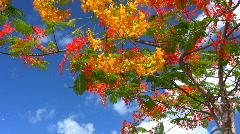 Tropical flowering trees Stock Footage
