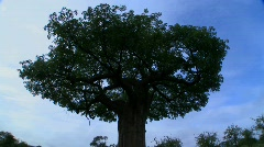 Time lapse shot of clouds moving over a majestic baobab tree in Tarangire Park, - stock footage