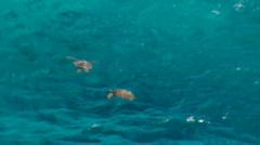 Sea Turtles Playing In Water - MediumShot-NoSound Stock Footage