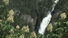 Shannon falls Stock Footage